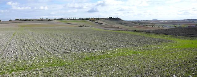 Campagne castillane, âpreté de la terre, Fuensaldaña, province de Valladolid, Castille-Léon, Espagne.