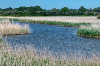 Reeds near Owl Copse