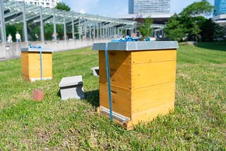 Launch of the Bee Blue Project