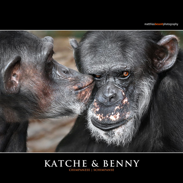 KATCHE & BENNY