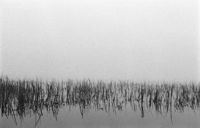 Foggy Beach 7