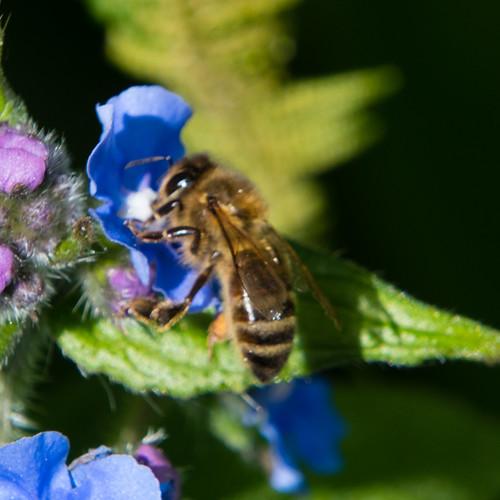 Bee selection