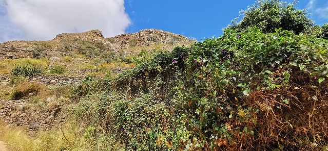Senderismo Barranco de las Boticarias Gran Canaria 05