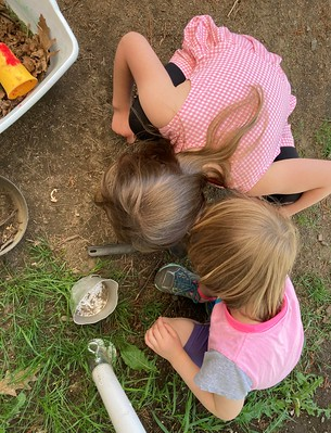 toads or insects or slugs?