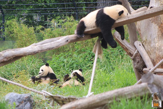 Besuch Zoo 29.05.21004