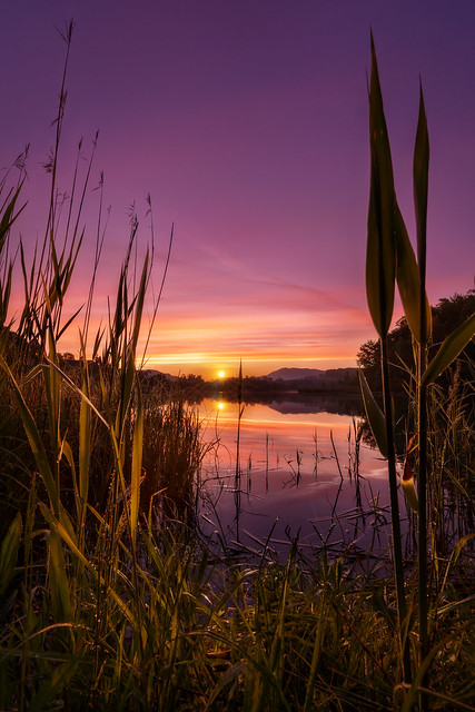 Sonnenaufgang an der Enns