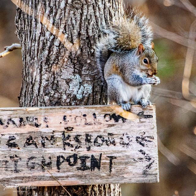 2019.12.07.8759.D500 Squirrel Nutkin