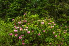 Flowering Forest