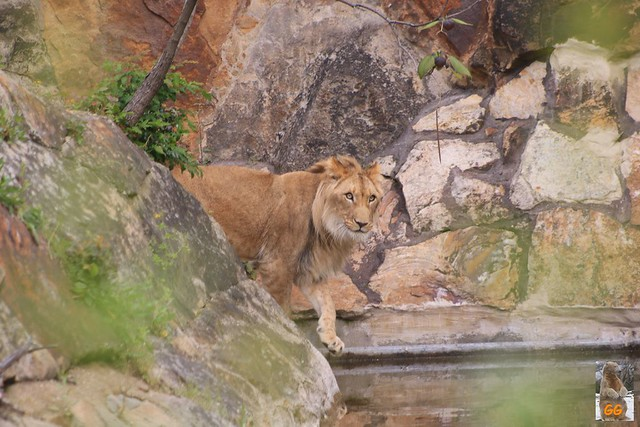 Besuch Zoo 29.05.21034