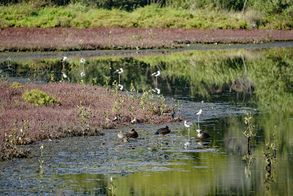 Stilts and ducks