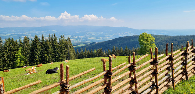 Blick über den Zaun