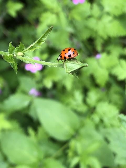 Ladybug on stage