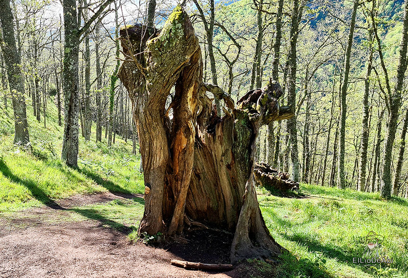 Senda Mitológica y mirador de Santa Catalina en Cantabria (3)