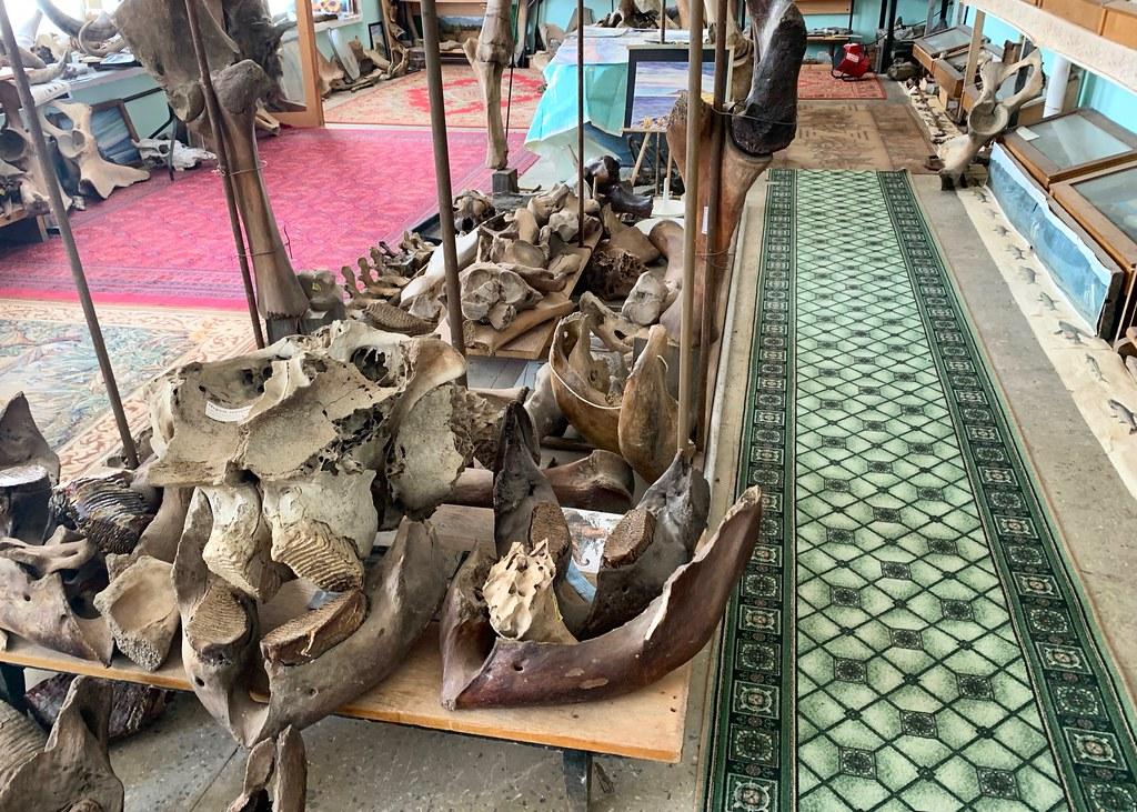 Музей Горностай в Тикси - самый интересный музей Якутии. IMG_7897