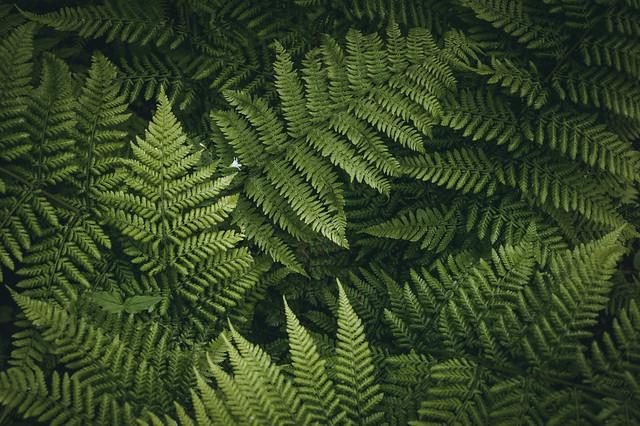 Frisch grün