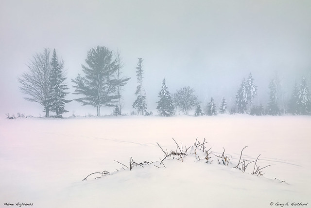 Winter Calm Composition