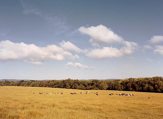 Worthington Farm