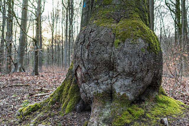 Mother nature's huge generosity ;) !!!