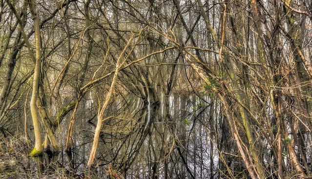 Jolis reflets sur une mare en forêt de Dourdan.