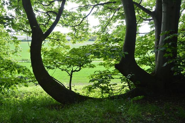 Pimhill Woodlands