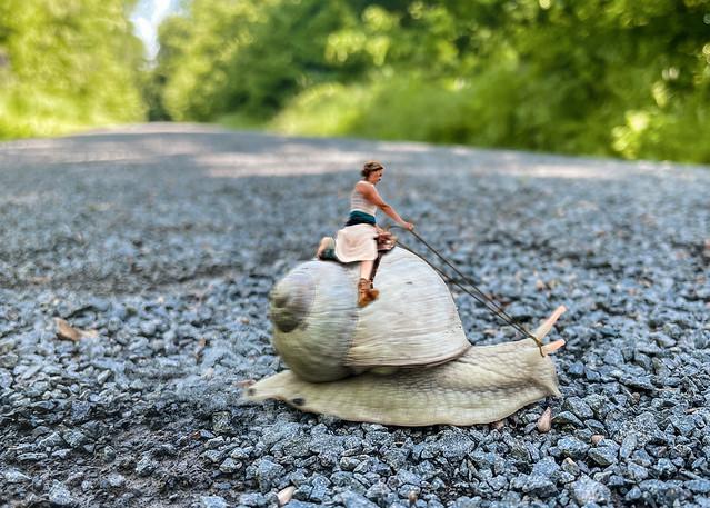 Snailway crossing