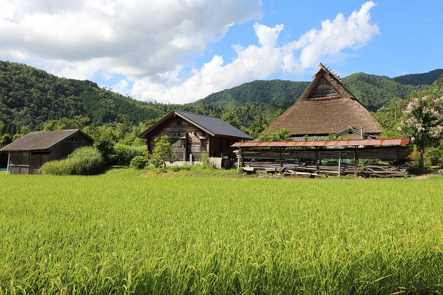 The rice fields and the classic styled farmer's house