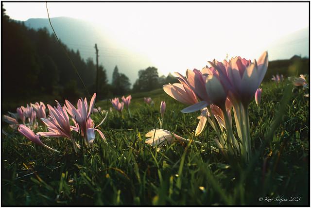 When the spring comes_1988_Leica R4