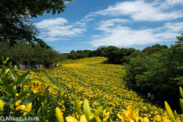 Kasuisai lily garden-1