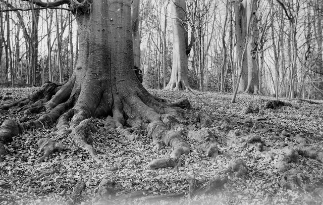 Root and bark
