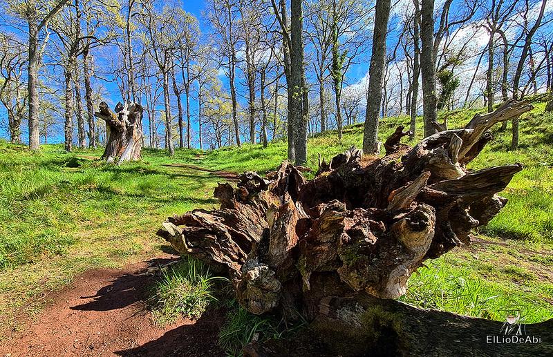 Senda Mitológica y mirador de Santa Catalina en Cantabria (6)