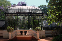 Glasshouse and a purple Jacaranda tree in bloom in a garden in the zoo in Buenos Aires, Argentina