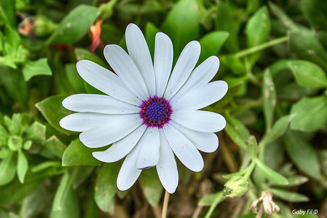 Una flor en Barranco