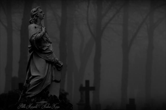 Between Fog, Frozen Web & Crosses