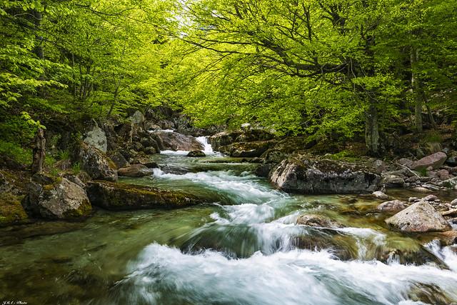 Río de Salenques (5)