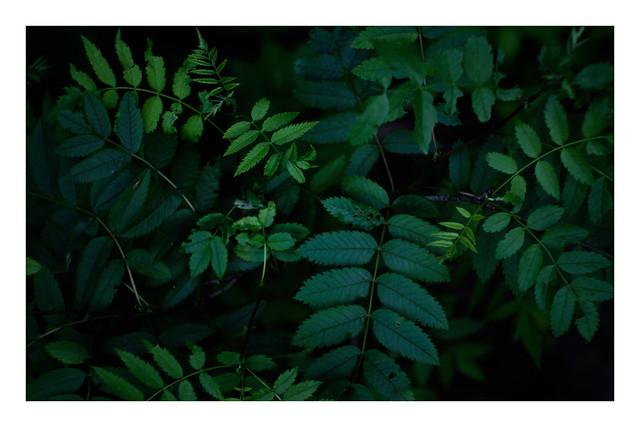 Various shades of green