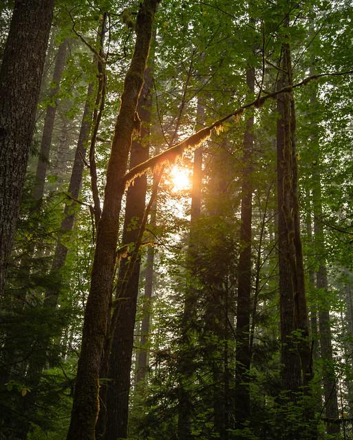 Moss Valance - Packwood, Washington