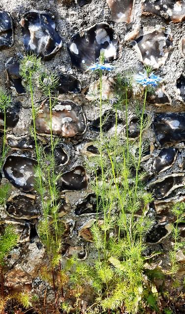 Cornflowers against flint wall