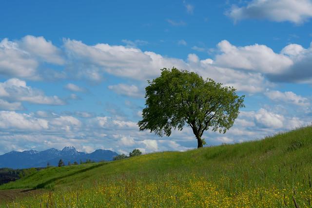 Beautiful Bavaria (explored)