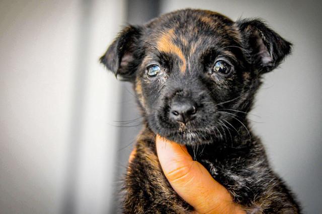Zoonoses promove feira de adoção de cães e gatos