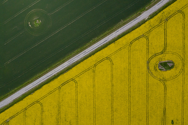 Aerial View of a Raps Field