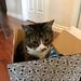 Watson in a Fluevog box