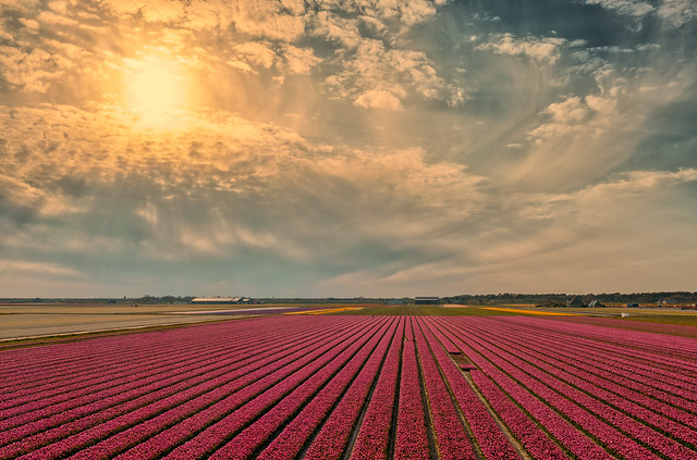 A Dutch sunset near Burgerbrug, Holland.