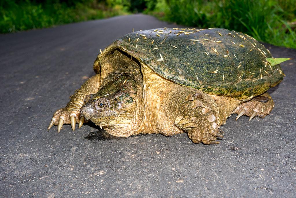 Turtles X-ing