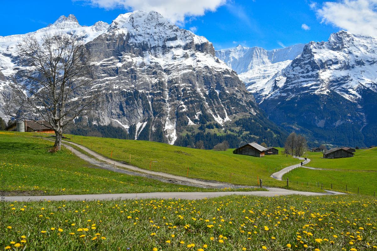 Grindelwald-(31)