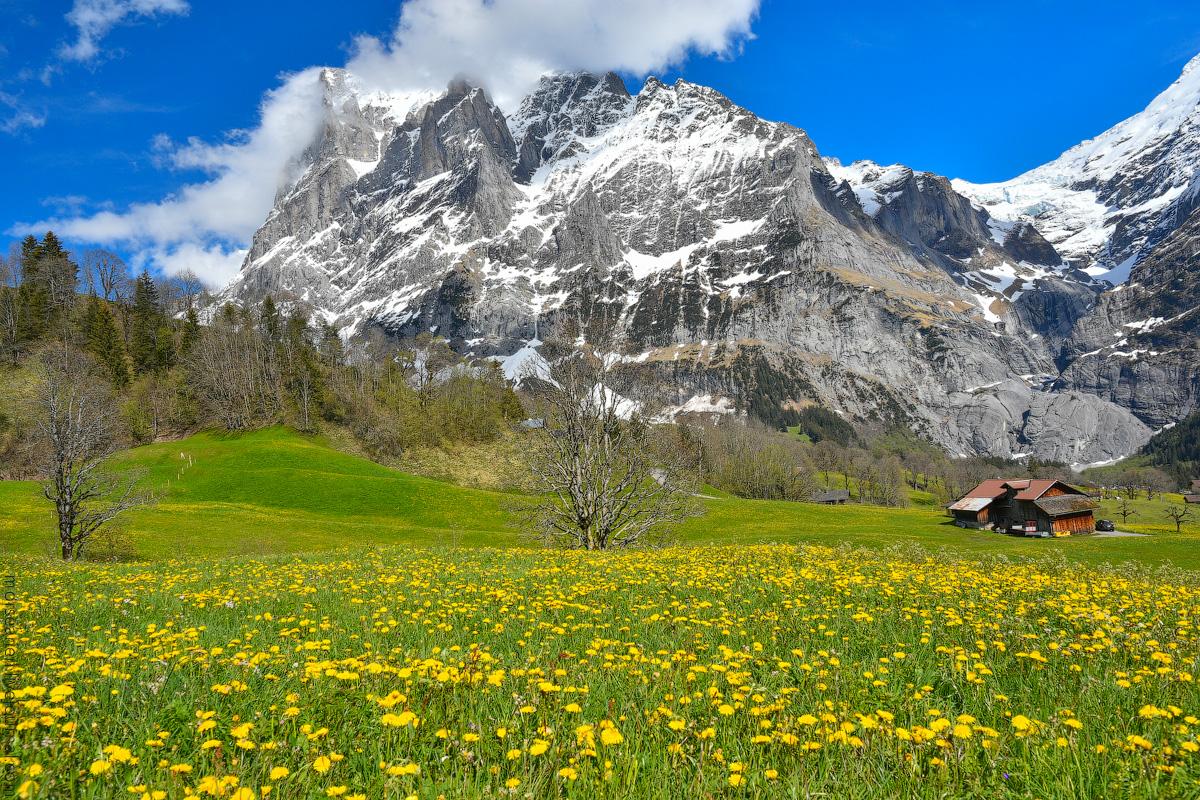 Grindelwald-(28)