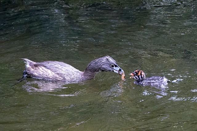 Feeding time! (EXPLORE)
