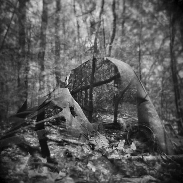 The Landlocked Forest #35