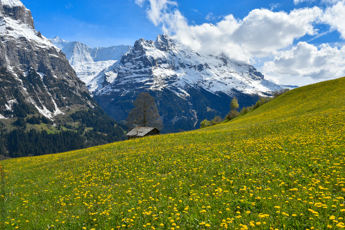 Grindelwald-(27)
