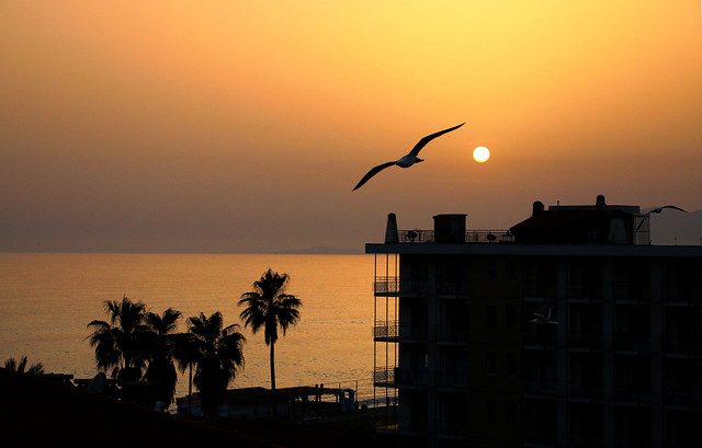 Sunset and a Seagull.