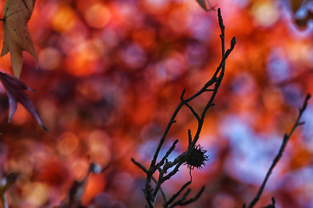 Autumn bokeh and silhouettes